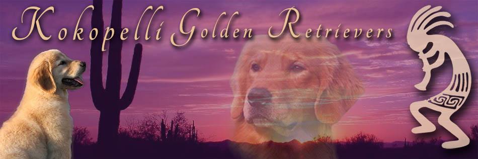 Golden Retriever Breeder Michigan Kokopelli Golden Retrievers