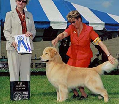 kokopelli golden retrievers cyber AM CH Ridgepond's Super High
